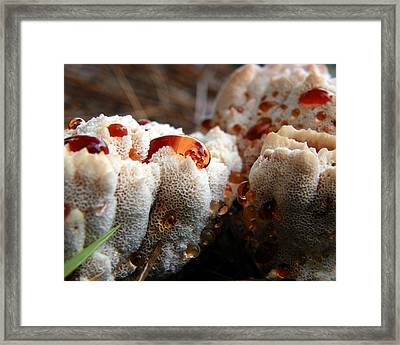 Oozing Fungus Framed Print by Chad and Stacey Hall