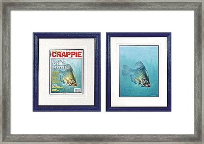Open Water Crappie Framed Print by JQ Licensing