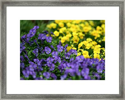 Opposites Attract Framed Print by Sabrina L Ryan