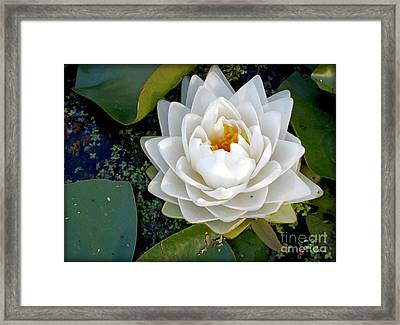 Optical Illusion In A Waterlily Framed Print by Kaye Menner