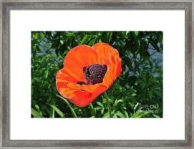 Orange Burst Framed Print by Luke Moore
