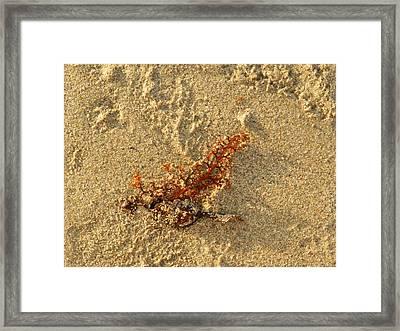 Orange Glow Framed Print by Leana De Villiers