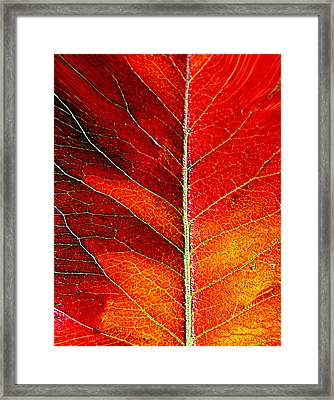 Orange In Autumn.... Framed Print by Tanya Tanski