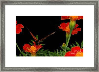 Orange On Orange Framed Print by Lydia Holly