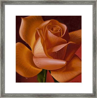 Orange Rose With Red Background Framed Print by Tony Chimento