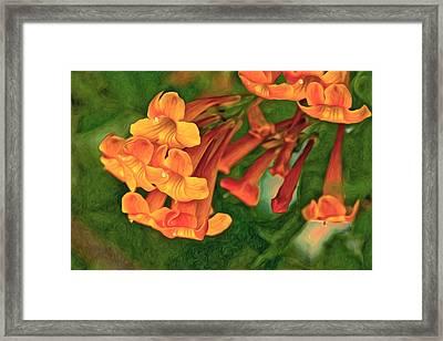 Orange Trumpet Vine Framed Print by James Steele