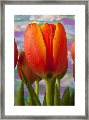 Orange Tulip Close Up Framed Print by Garry Gay