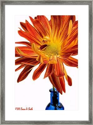 Orange You Happy Framed Print by Susan Smith