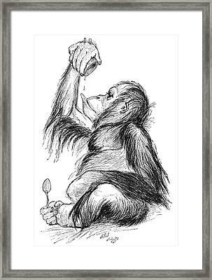 Orangutan, 19th Century Framed Print by