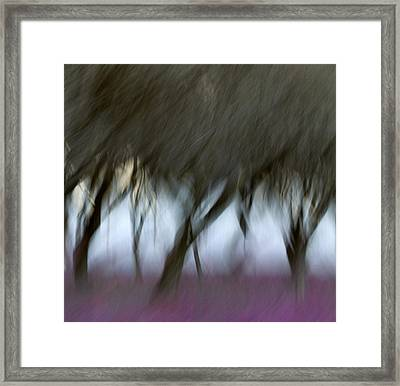 Orchard In Springtime Framed Print by Carol Leigh