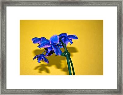 Orchid #1 Framed Print by David Alexander