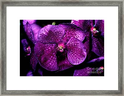 Orchid 11 Framed Print by Terry Elniski