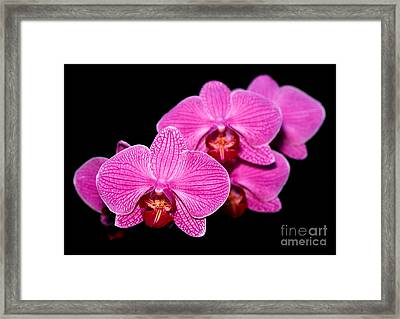 Orchid 17 Framed Print by Terry Elniski