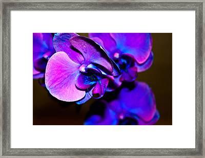 Orchid #2 Framed Print by David Alexander