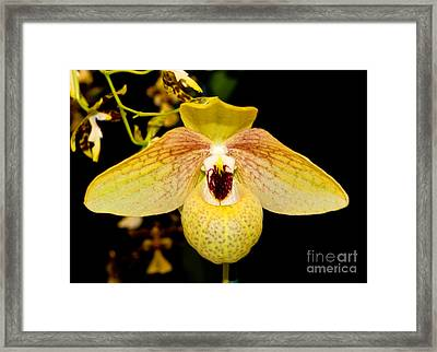 Orchid 23 Framed Print by Terry Elniski