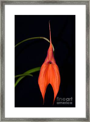 Orchid 29 Framed Print by Terry Elniski
