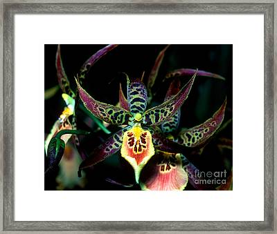 Orchid 3 Framed Print by Terry Elniski