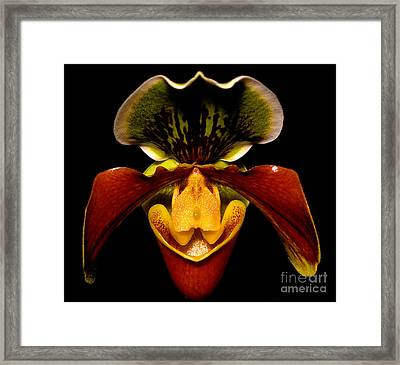 Orchid 51 Framed Print by Terry Elniski