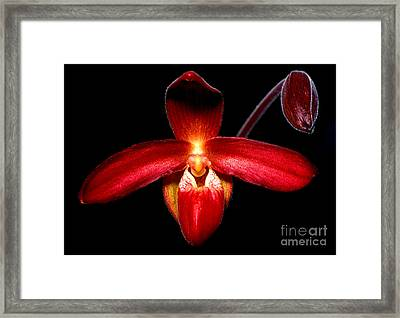 Orchid 63 Framed Print by Terry Elniski