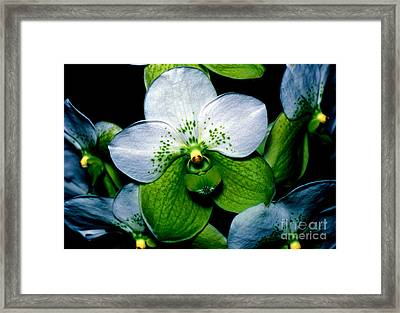 Orchid 7 Framed Print by Terry Elniski