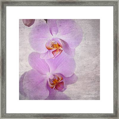 Orchid Framed Print by Jane Rix