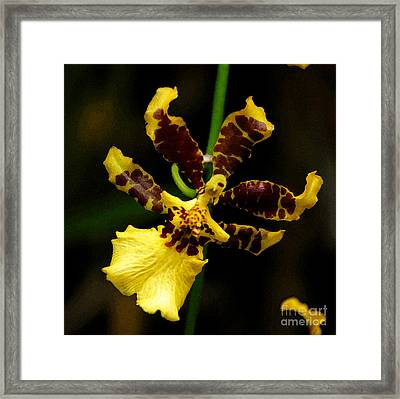 Orchid Painting Framed Print by Pravine Chester