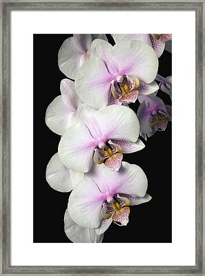 Orchids Framed Print by David Chapman