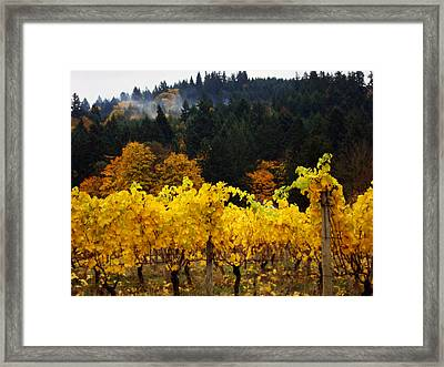 Oregon Autumn Vineyards Framed Print by Glenna McRae