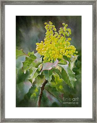 Oregon Grape Framed Print by Sharon Freeman