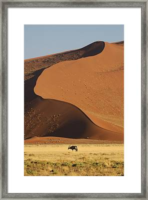 Oryx II Framed Print by Christian Heeb