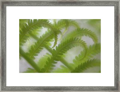 Ostrich Fern Frond Pattern Of Curves Framed Print by Kathleen Clemons