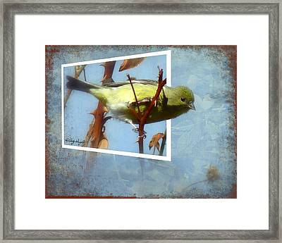 Out Of Bounds Female Goldfinch Framed Print by Cindy Wright