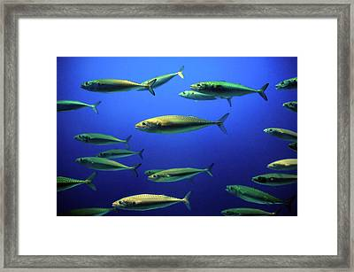Out Of Space Framed Print by Ian Payne
