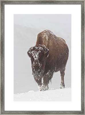 Out Of The Fog Framed Print by D Robert Franz