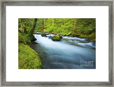 Out Of The Rainforest Framed Print by Mike  Dawson