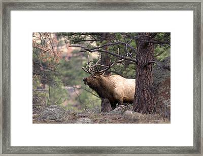 Out Of The Trees Framed Print by Anne Rodkin