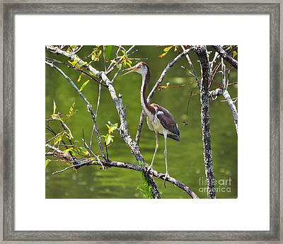 Out On A Limb Framed Print by Al Powell Photography USA