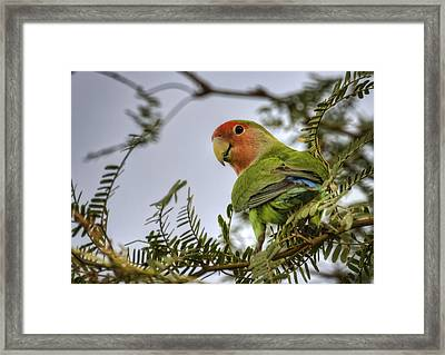 Over My Shoulder  Framed Print by Saija  Lehtonen