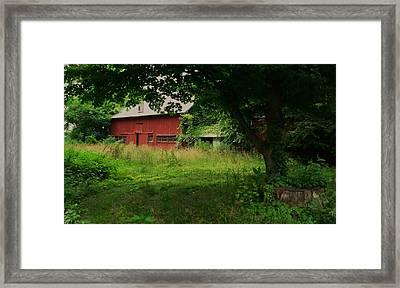 Overgrown Framed Print by Anna Villarreal Garbis