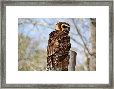 Owl In A Tree Framed Print by Paulette Thomas