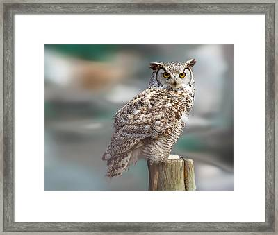 Owl Love Framed Print by Naman Imagery