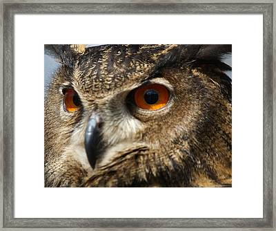 Owl Up Close Framed Print by Paulette Thomas