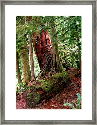 Pacific Rim National Park 9 Framed Print by Terry Elniski