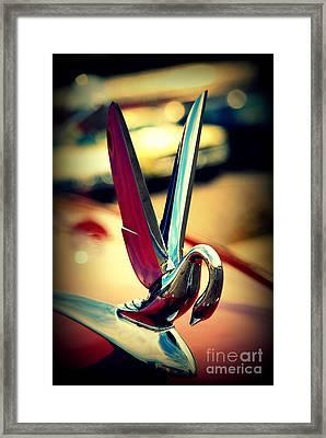 Packard Swan 2 Framed Print by Susanne Van Hulst