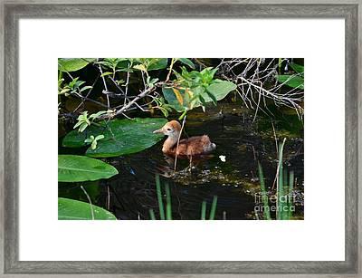 Paddle Paddle Framed Print by Lynda Dawson-Youngclaus