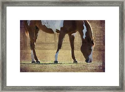 Paint Horse Framed Print by Betty LaRue