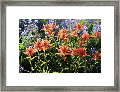 Paintbrushes Wildflowers Rainier National Park Framed Print by Pierre Leclerc Photography