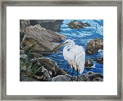 Painting  Sharon's Heron On The Rocks Framed Print by Judy Via-Wolff