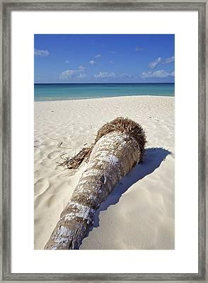 Palm Tree On A Caribbean White Sand Beach Framed Print by David Letts