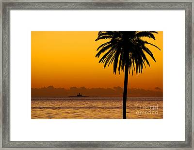 Palm Tree Sunset Framed Print by Carlos Caetano